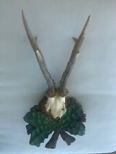 Antique Long Horn Antler On Well Carved Plaque Black Forest Taxidermy Trophy