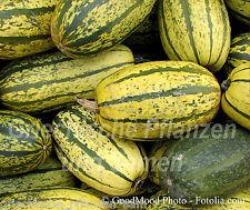 Zucchini DELICATA * zartes Gemüse * 6 Samen * Kürbis * gestreift * SEHR SELTEN
