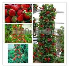 600 PCS Red Climbing Strawberry Seeds Fruit Seeds DIY High Quality New