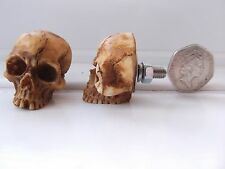 2- ZOMBIE SKULL HEAD LICENCE/ NUMBER PLATE BOLTS HARLEY DAVIDSON/ SUZUKI HOT ROD