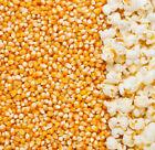 ORGANIC CINEMA POPCORN Maize Kernels Corn Seeds Very HIGH Quality FREE FAST POST
