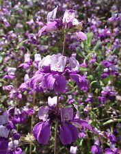 """Berberitze Berberis vulgaris 50 exotische Samen """" ALLES NUR 1 EURO"""""""