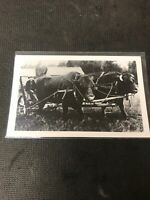 real photo Postcard Kid Farmer With Two Big Bulls  Oakburn  Manitoba A1