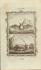 "1785 grabado de cobre-Buffons historia natural. ""Bat"""