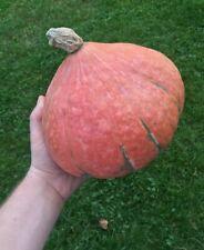 GRAINE DE POTIMARRON BIO x30 (Cucurbita maxima) Pumpkin seeds origine FRANCE