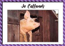 Carte Postale - Cochon