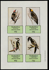 GB Locals - Eynhallow (1068) 1981 WOODPECKERS imperf sheetlet unmounted mint