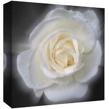 Stunning White Floral Rose Flower Canvas Wall Art Picture Print - All sizes