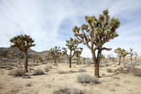 Joshua Tree National Park California Desert Landscape Photo Poster 18x12 inch