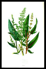 Anne Pratt Botanical Print Leaf Lot (3)  1866 Plants Grasses Sedges & Ferns