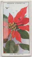 Pointsettia  Plant Leaves Attract Insects For Pollination 85+ Y/O Trade Ad Card