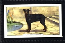 Gallaher Dogs 2nd Series 1938 - Manchester Terrier No. 17