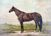 """perfact 36x24 famous oil painting handpainted on canvas""""A horse""""N3651"""