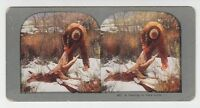 [21669] VINTAGE T. W. INGERSOLL A YEARLING IN HARD LUCK STEREOVIEW (#487)