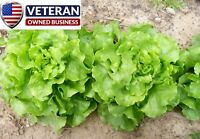 lettuce seeds Bibb 800+ Heirloom Vegetable Seeds