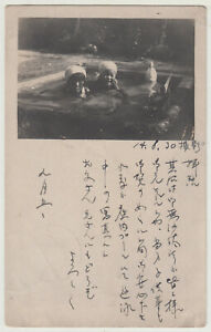 Antique Postcard / Kids in Play Pool / Japanese / Dated 1925