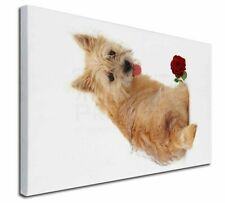 More details for cairn terrier with red rose x-large 30