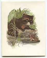 VINTAGE RACCOON ANIMAL POND LILY PAD WILD FLOWERS FRIENDSHIP NATURE CARD PRINT