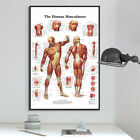 Human Body Analysis Acupuncture Medicine Wall Art Poster Print Canvas Painting