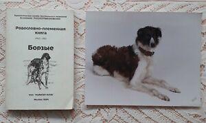BORZOI CLUB & FOREIGN BORZOI MAGS RUSSIAN BORZOI PEDIGREE BOOK &  BORZOI PHOTO