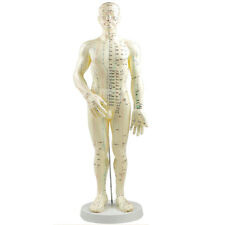 "Acupuncture Model 20"" Male with Base, acupuncture meridians model Chart Book"