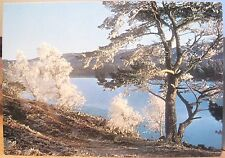 Scotland Postcard Loch-An-Eilean Frost Trees Winter Speyside Inverness Dixon