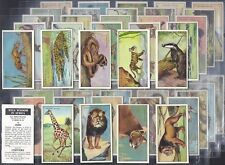 CHIVERS-FULL SET- WILD WISDOM IN AFRICA (48 CARDS) - EXC