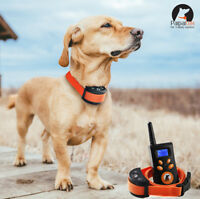 Dog Training Collar 1500FT Remote Rechargeable Waterproof Orange Belt Paipaitek