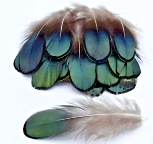 20pcs Lady Amherst Natural Green Pheasant Feathers DIY Craft Millinery Jewellery