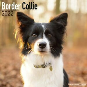 Border Collie Calendar 2022 Dog Breed Wall Calendar 15% OFF MULTI ORDERS!