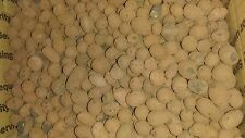5 Liters Plant !T Grow !t Clay Pebbles Expanded Clay Hydroponic Media