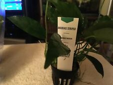 Anubias Barteri Striped Aquarium plant Potted