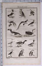 1788 ORIGINAL PRINT BIRDS PENGUIN BRENT GOOSE DIVER LESSER REED SPARROW HORN OWL