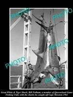 OLD POSTCARD SIZE PHOTO OF GREAT WHITE SHARK BRING CAUGHT IN 1961 GAME FISHING