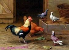 ZWPT703 rooster chickren birds eating hand painted art oil painting on canvas