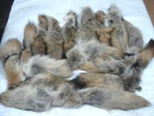 Wholesale Lot of 20 Tanned Eastern Coyote Tails/Crafts/Real Fur Tails