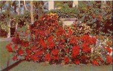 Poinsettia in FLORIDA ~ Std Size Chrome