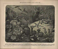 Licht-Druck 1898: MEERWASSER-AQUARIUM. Wasser Fische Ozean Algen Pflanzen