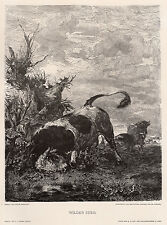 """Attractive 1800s Victor WEISHAUPT Nature Woodcut """"The Wilder Stier"""" SIGNED COA"""