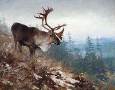 Rungius Carl Yukon King Caribou Print 11 x 14 #4304
