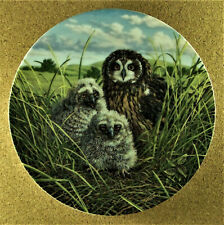 Happy Home: Short-Eared Owls Plate Under Mother's Wing #8 Jim Beaudoin Chicks