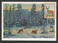 RUSSIA MK 1957 FAUNA HIRSCH WILD DEER MAXIMUMKARTE CARTE MAXIMUM CARD MC d7747
