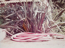 "DAVID HOCKNEY Signed 1973 Original Color Photograph - ""Pink Hose"""