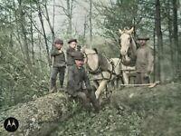 Horses Logging Men Boys Axe Forest Antique Photo Dry Plate Glass Negative 1900s