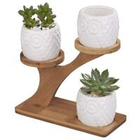 "3 Pack 2.75"" Ceramic Small Owl Succulent Cactus Flower Plant Pot w Bamboo Stand"