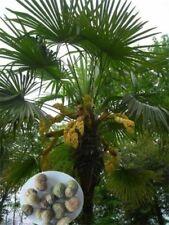 Semillas de bonsái