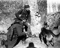French Soldiers with Trained Rescue Dog 8x10 WWI WW1 Photo 25