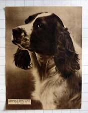 "1935 English Springer ""rosemullion Of Harting"" Bread By Lt Col Carrell"
