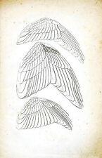 Framed Antique Print – Angel Wings (Picture Vintage Archangel Cherub Church Art)