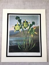 Vintage Botanical Print Pitcher plant Flower Thornton's Temple of Flora LARGE